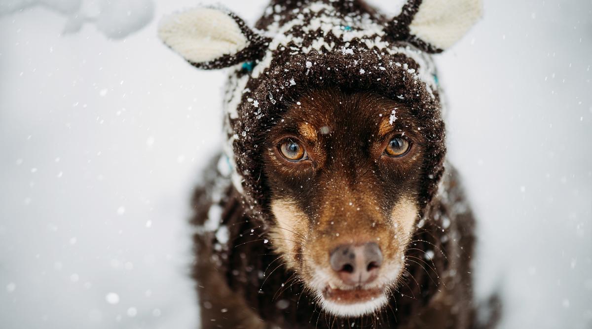 Slideshow Ebro im Schnee3 Tierfotografie Haustierfotografie Fotografie Fotograf Karlsruhe Ettlingen Pforzheim Bretten Bruchsal Rastatt Shooting