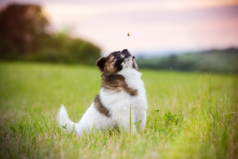 Fotografie Shooting Tiere Haustiere Hund Hunde Welpen 4-Beiner Karlsruhe Ettlingen Rastatt Bretten Bruchsal Pforzheim2