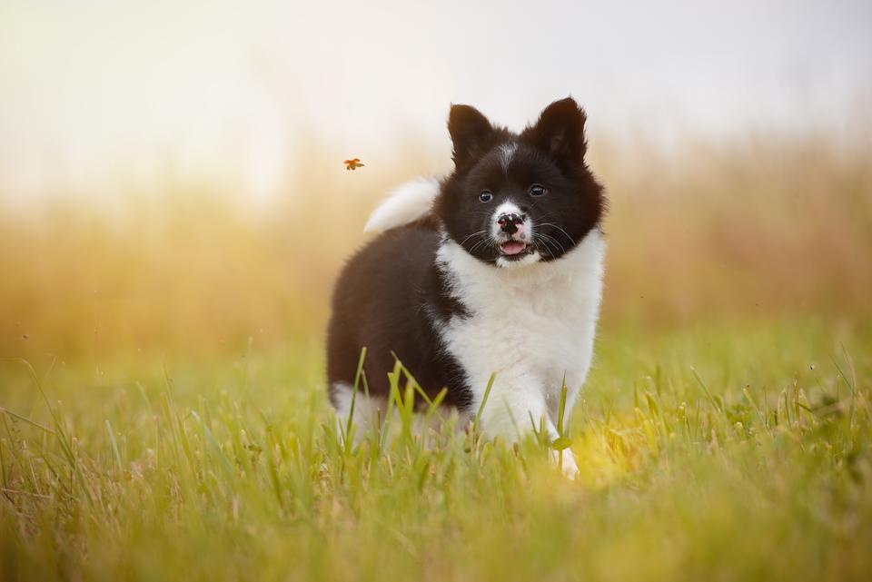 Fotografie Shooting Tiere Haustiere Hund Hunde Welpen 4-Beiner Karlsruhe Ettlingen Rastatt Bretten Bruchsal Pforzheim5