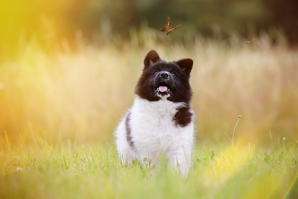 Fotografie Shooting Tiere Haustiere Hund Hunde Welpen 4-Beiner Karlsruhe Ettlingen Rastatt Bretten Bruchsal Pforzheim6