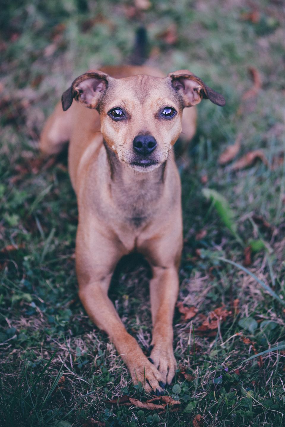 Fotografie Shooting Tiere Haustiere Hund Hunde Welpen 4-Beiner Karlsruhe Ettlingen Rastatt Bretten Bruchsal Pforzheim10 Kopie