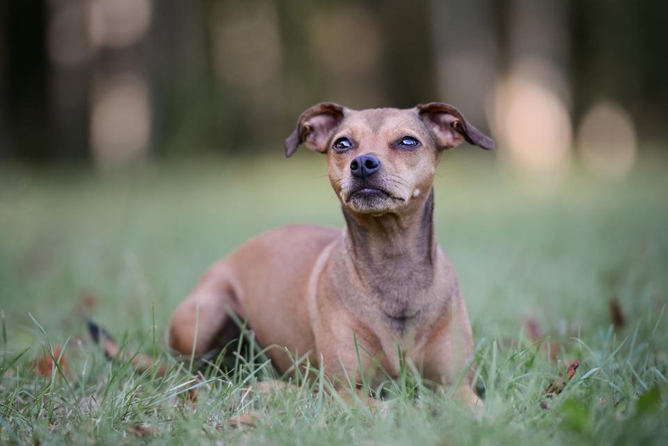 Fotografie Shooting Tiere Haustiere Hund Hunde Welpen 4-Beiner Karlsruhe Ettlingen Rastatt Bretten Bruchsal Pforzheim11
