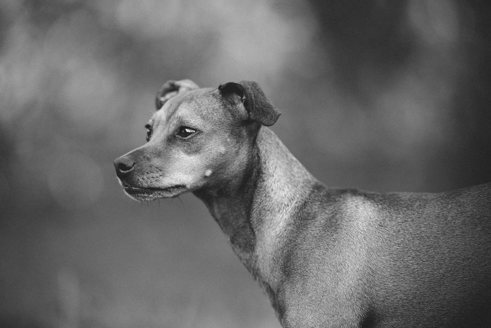 Fotografie Shooting Tiere Haustiere Hund Hunde Welpen 4-Beiner Karlsruhe Ettlingen Rastatt Bretten Bruchsal Pforzheim20