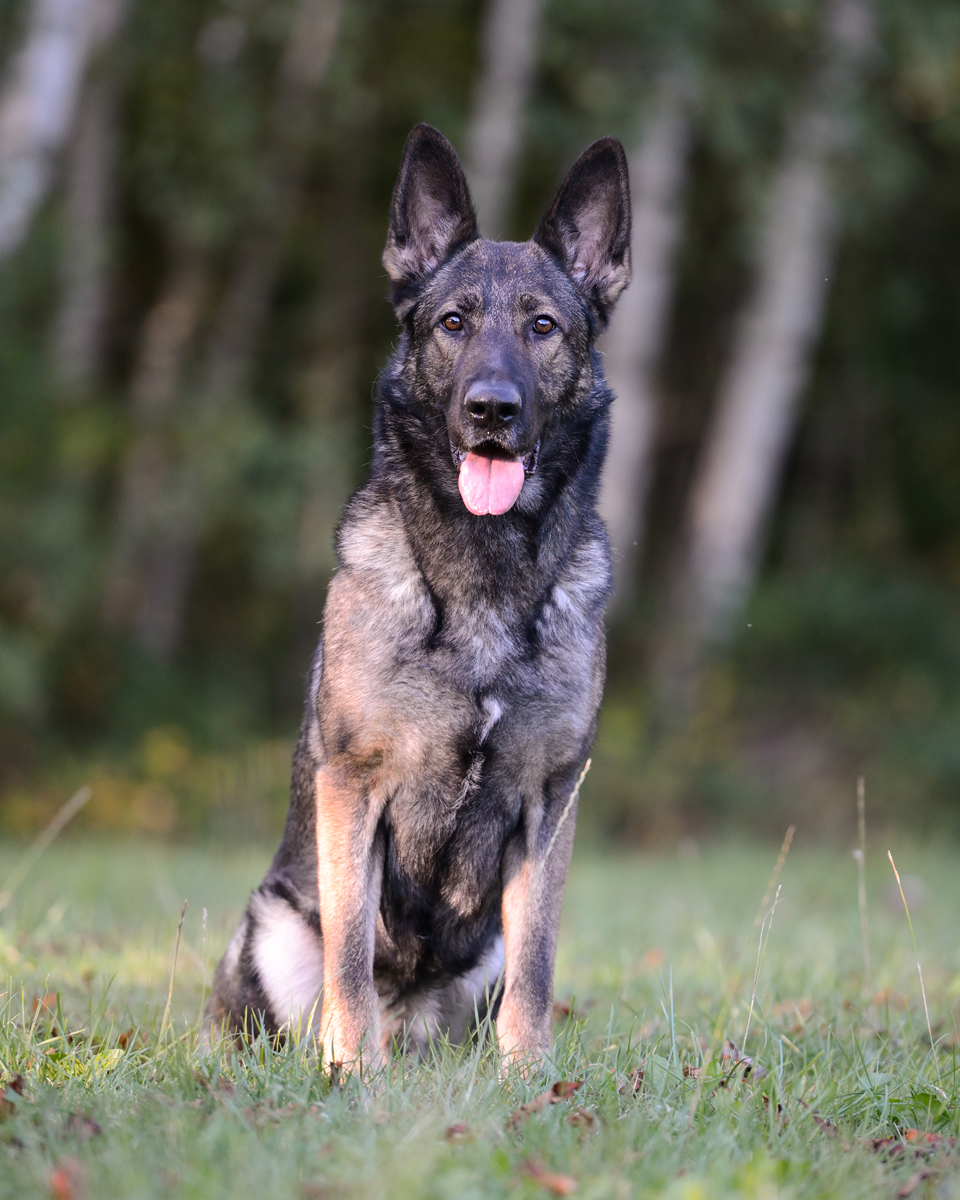 Fotografie Shooting Tiere Haustiere Hund Hunde Welpen 4-Beiner Karlsruhe Ettlingen Rastatt Bretten Bruchsal Pforzheim4