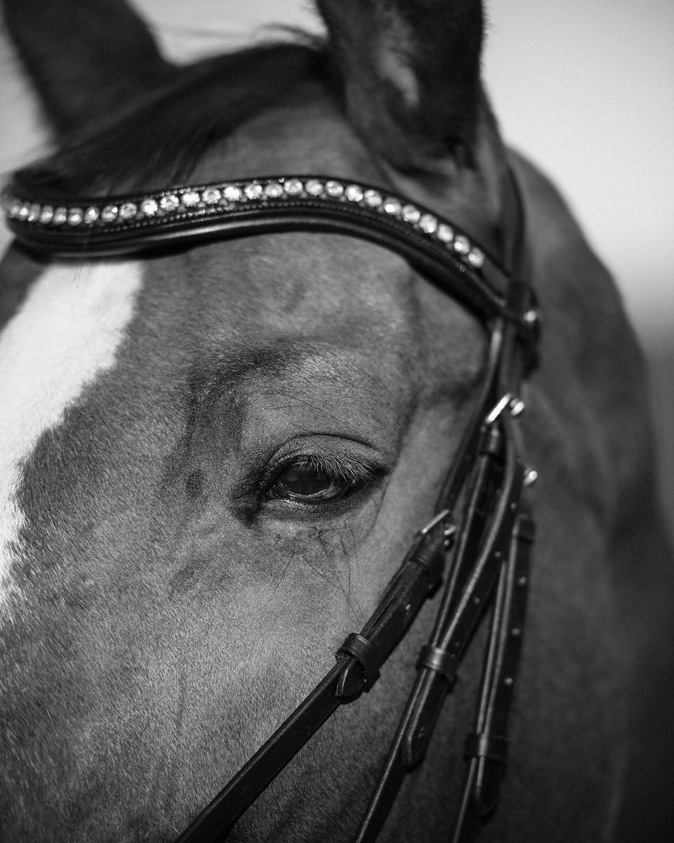 Fotografie Shooting Fotograf Fotografin Pferde Pferd Pony Tier Tiere Tiershooting Pferdeshooting Pferdefotografie Outdoor Ettlingen Karlsruhe Pforzheim Bruchsal Bretten Kraichtal Straubenhardt Lifestyle Portrait 12