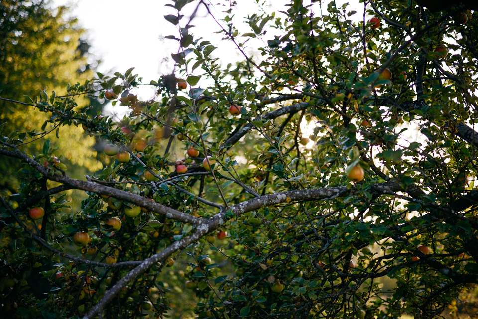 Tierfotografie Haustierfotografie Fotografie Fotograf Fotografin Hund Hunde Hochzeit Hundefotografie Karlsruhe Ettlingen Pforzheim Bretten Bruchsal Rastatt Shooting Enzkreis Labrador Golden Retriever Goldie 11